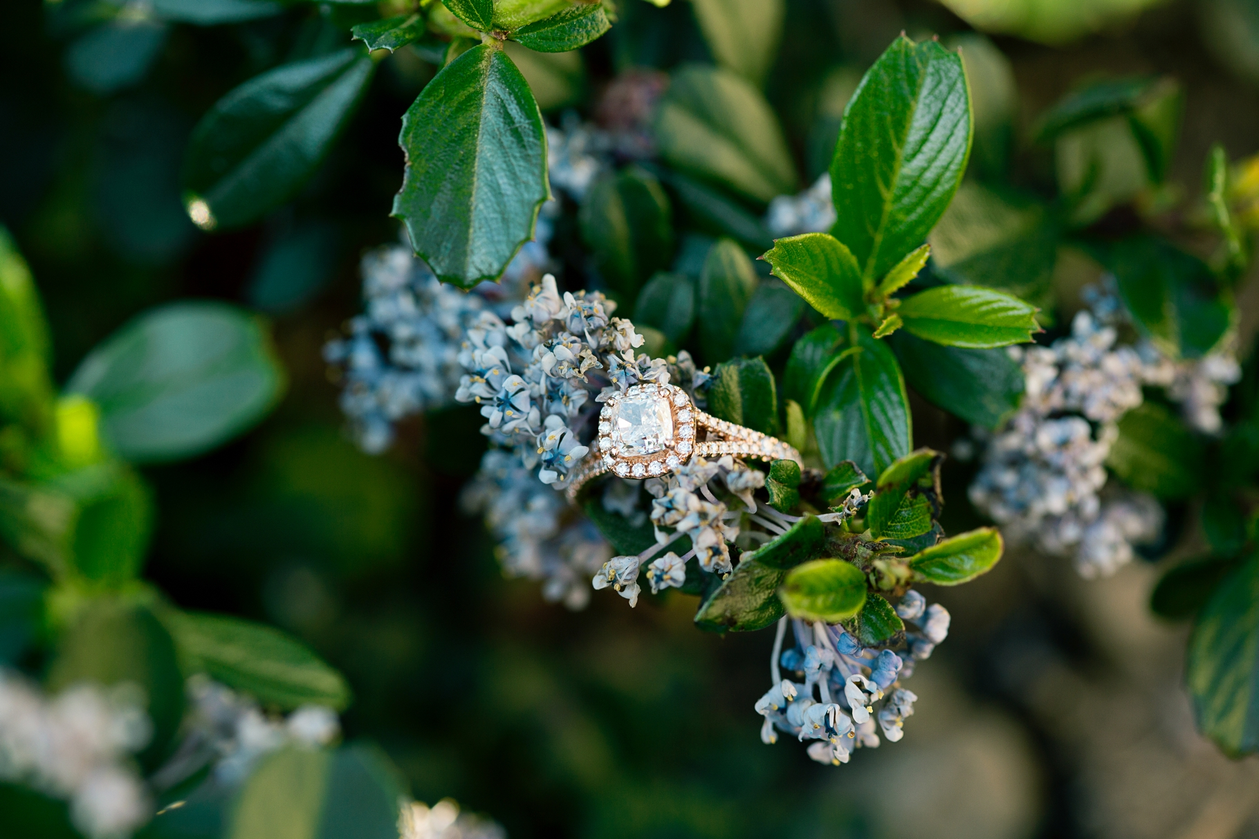 6-Engaged-Wedding-Ring-Diamond-Seattle-Waterfront-Myrtle-Edwards-Park-Flowers-Elliot-Bay-Trail-Enagement-Photographer-Wedding-Photography-by-Betty-Elaine