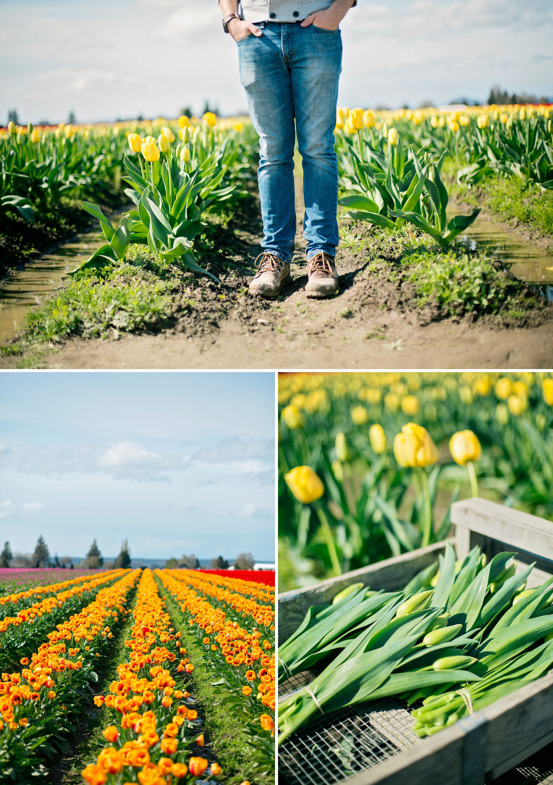 17-2015-Photographer-Year-in-Review-Skagit-Tulip-Fields-Seattle-Wedding-Photography-by-Betty-Elaine