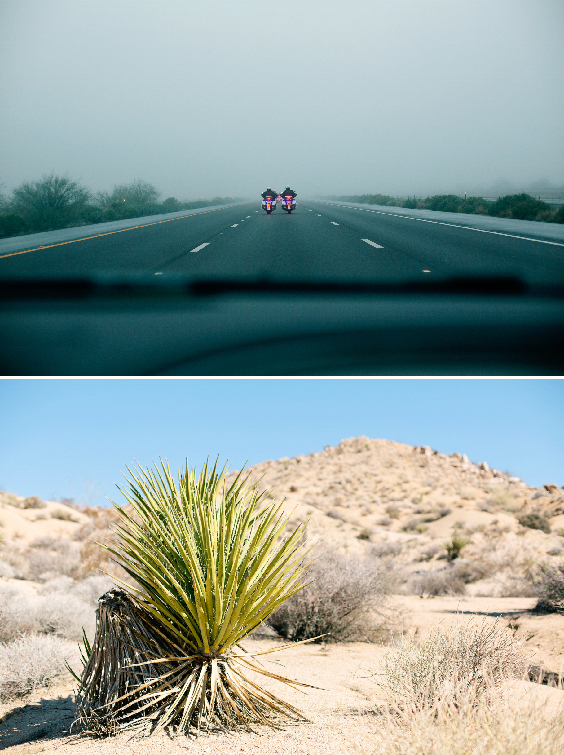 2-2015-Arizona-Joshua-Tree-National-Park-Photographer-Year-in-Review-Seattle-Wedding-Photography-by-Betty-Elaine
