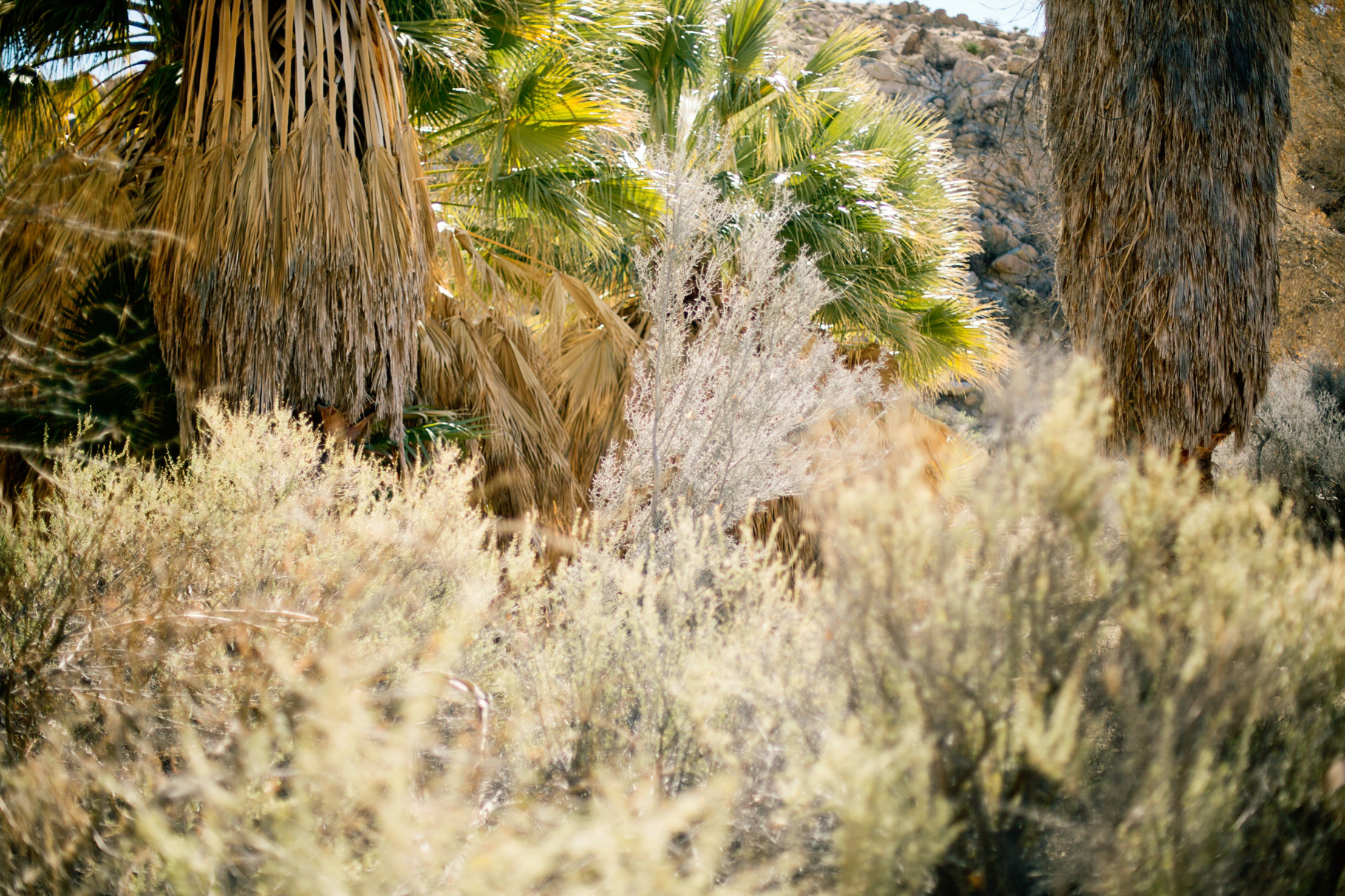 6-2015-Photographer-Joshua-Tree-National-Park-Year-in-Review-Seattle-Wedding-Photography-by-Betty-Elaine