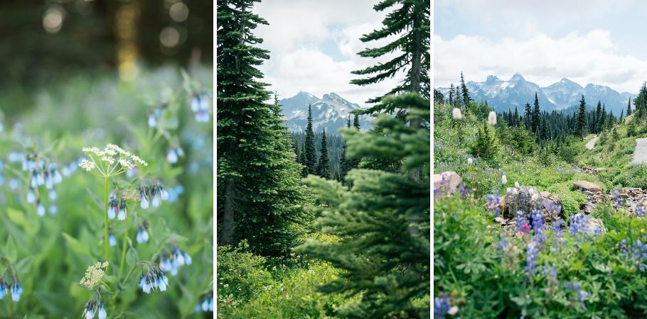 choosing-meaningful-location-engagement-photography-seattle-wedding-photographer-mt-rainier-national-park-paradise